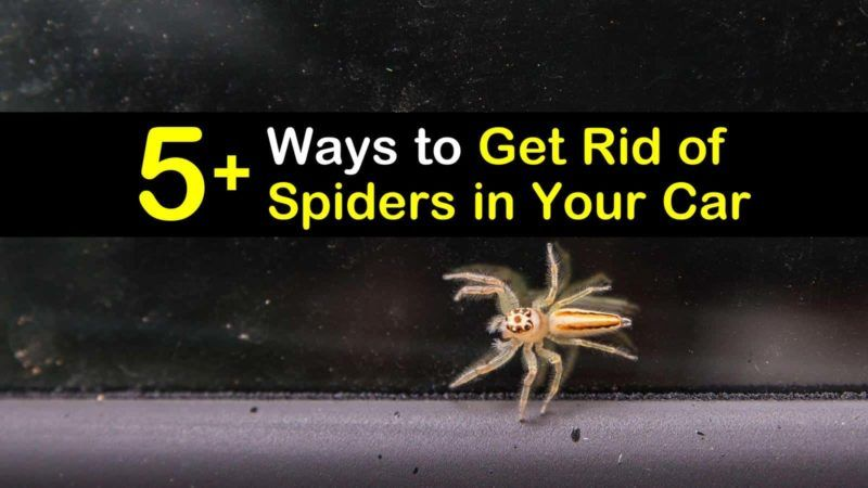 5 fast ways to get rid of spiders in your car get rid