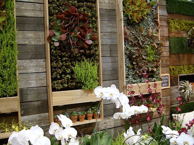 vertical gardens and living walls garden walls the daily green