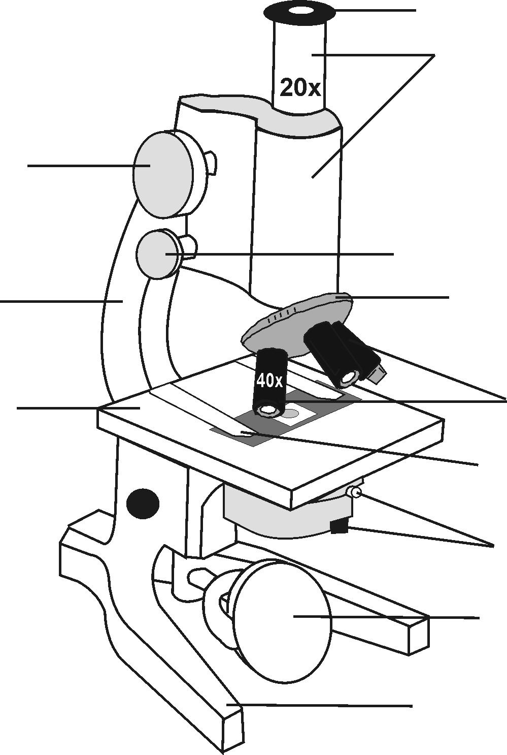 microscope picture identification