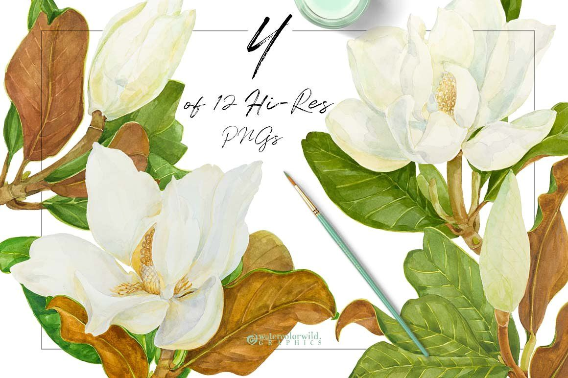 Southern Magnolia Vintage Clipart Great Meaningful Storytelling Blooming Flower Clipart Watercolor Flowers Clip Art