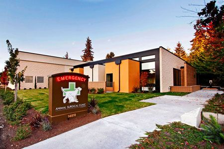 The elements of style in veterinary practice Luxury