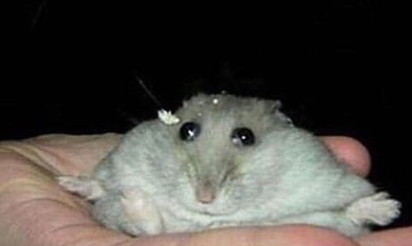 Pin By Kristina On Rodents With Images Wholesome Memes