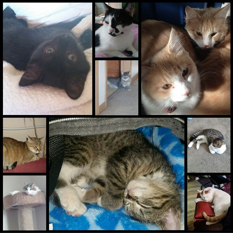 Featured Felines From My Followers 3 With Images Cats Unique Cats Feline