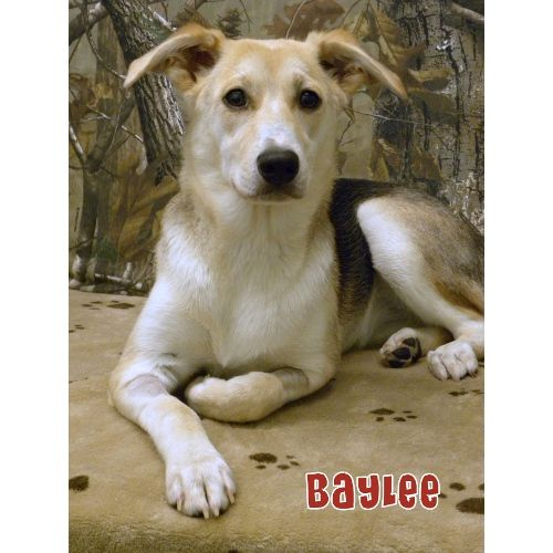 7/3/14 GREAT FAMILY DOG TO ADOPT. My Name Is BAYLEE And I