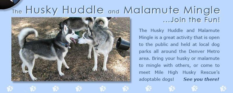Mile High Husky Rescue S Husky Huddle And Malamute Mingle Husky Rescue Animal Rescue Dog Park