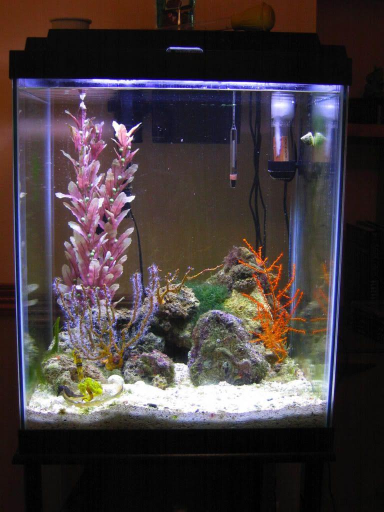 30 gal tall fish tank design ideas google search fish tanks