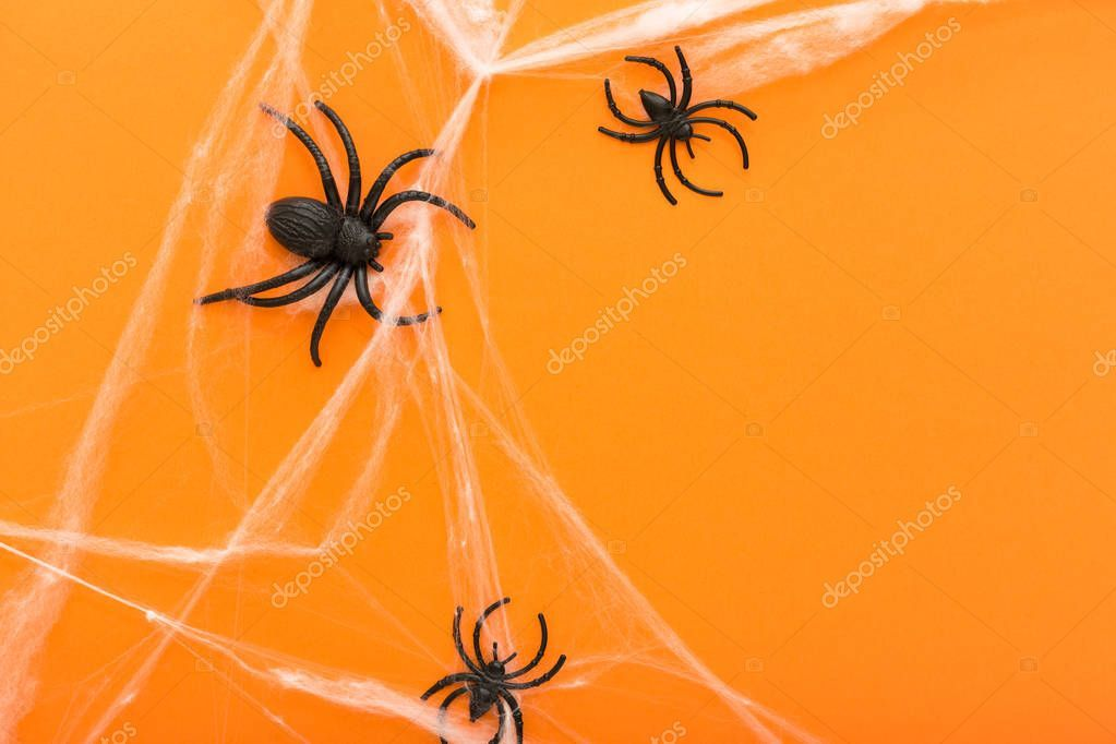 Orange Symbol On Halloween 2020 Halloween background with spider web and spiders as symbols of
