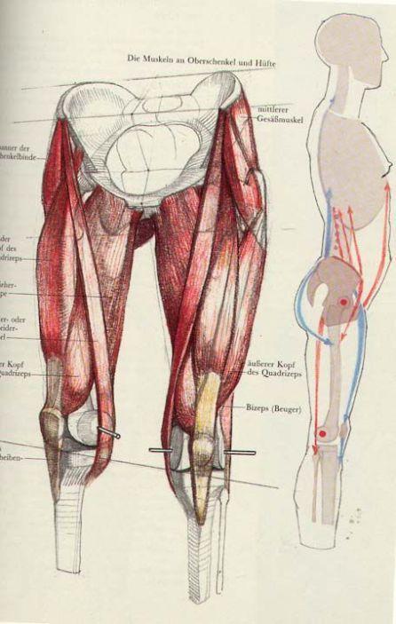 Character Design Collection: Legs Anatomy | Shin Splints Help ...