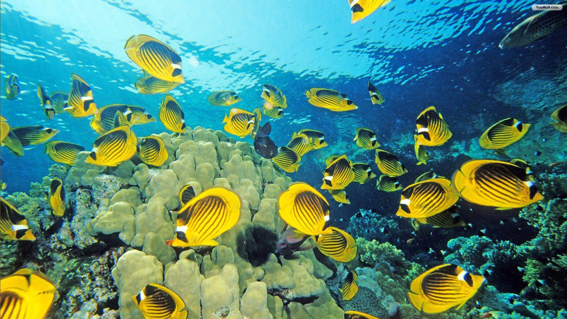 наиболее экстремальных живые прикольные обои на смартфон море океан площадки водных горок