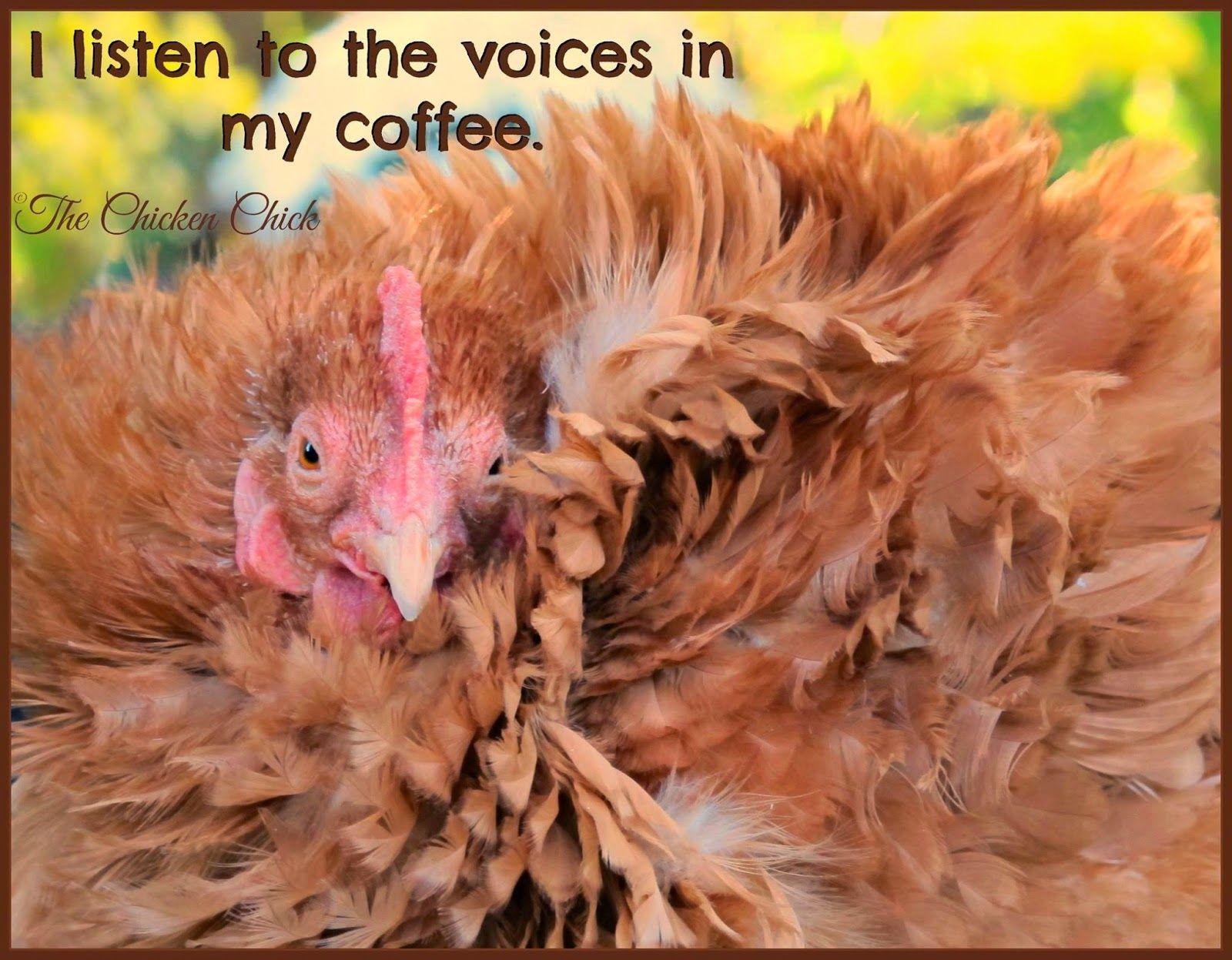 Black Friday Coffee Meme