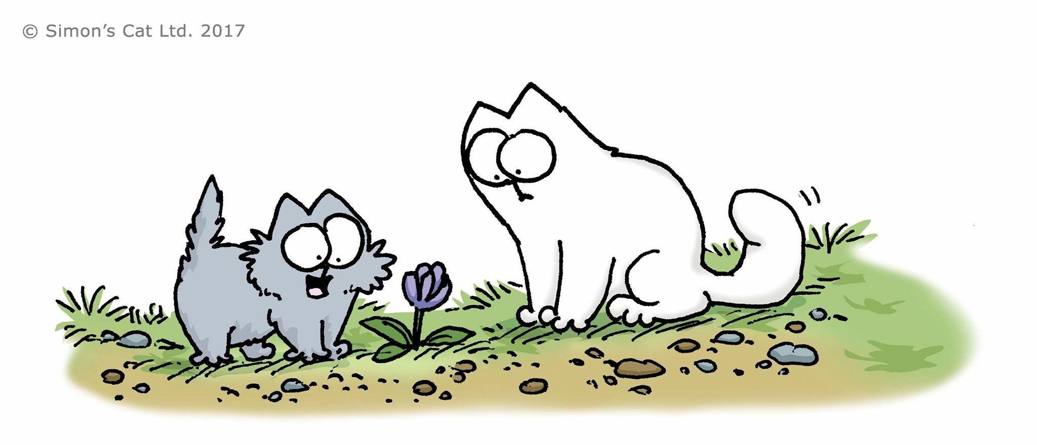 Simon S Cat Simons Cat Cat Friendly Plants Cat Supplies