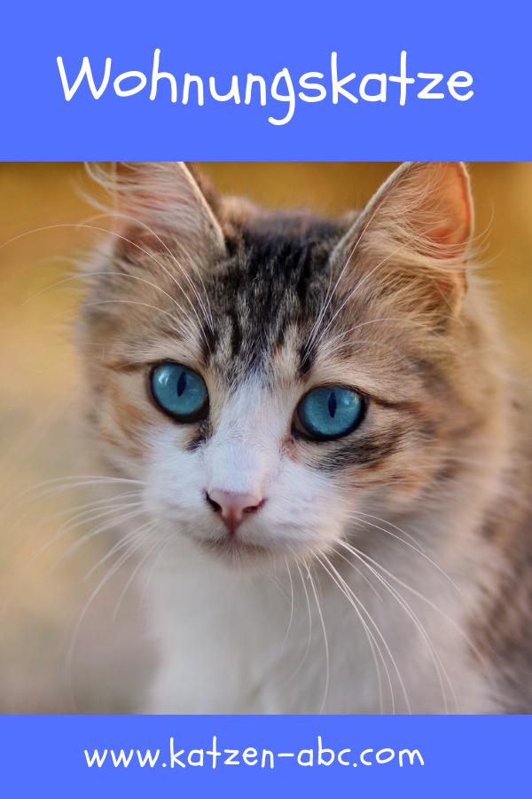 Wohnungskatze Artgerecht Halten Allgemeine Informationen Katzen Namen Katzen Katzennamen