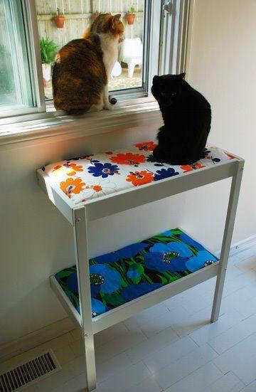 A Cat Project Plus Bonus Desire To Inspire