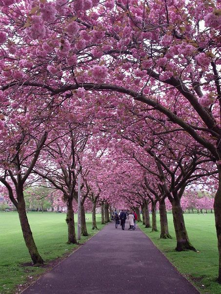 Cherry Blossoms In Edinburgh Cool Places To Visit Beautiful Places Wonders Of The World