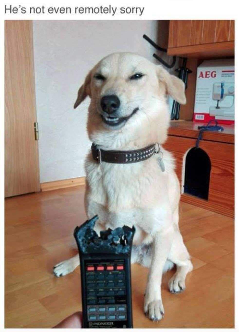 Pin By Danielle Kraft On Funny Animal Jokes Funny Animal Pictures Funny Animal Memes