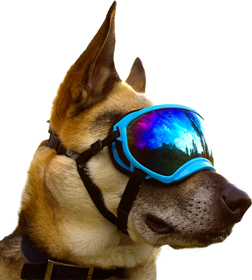a37830ea5f Rex Specs were developed because our dogs needed eye protection. We ask a  lot of our dogs - days on the trail