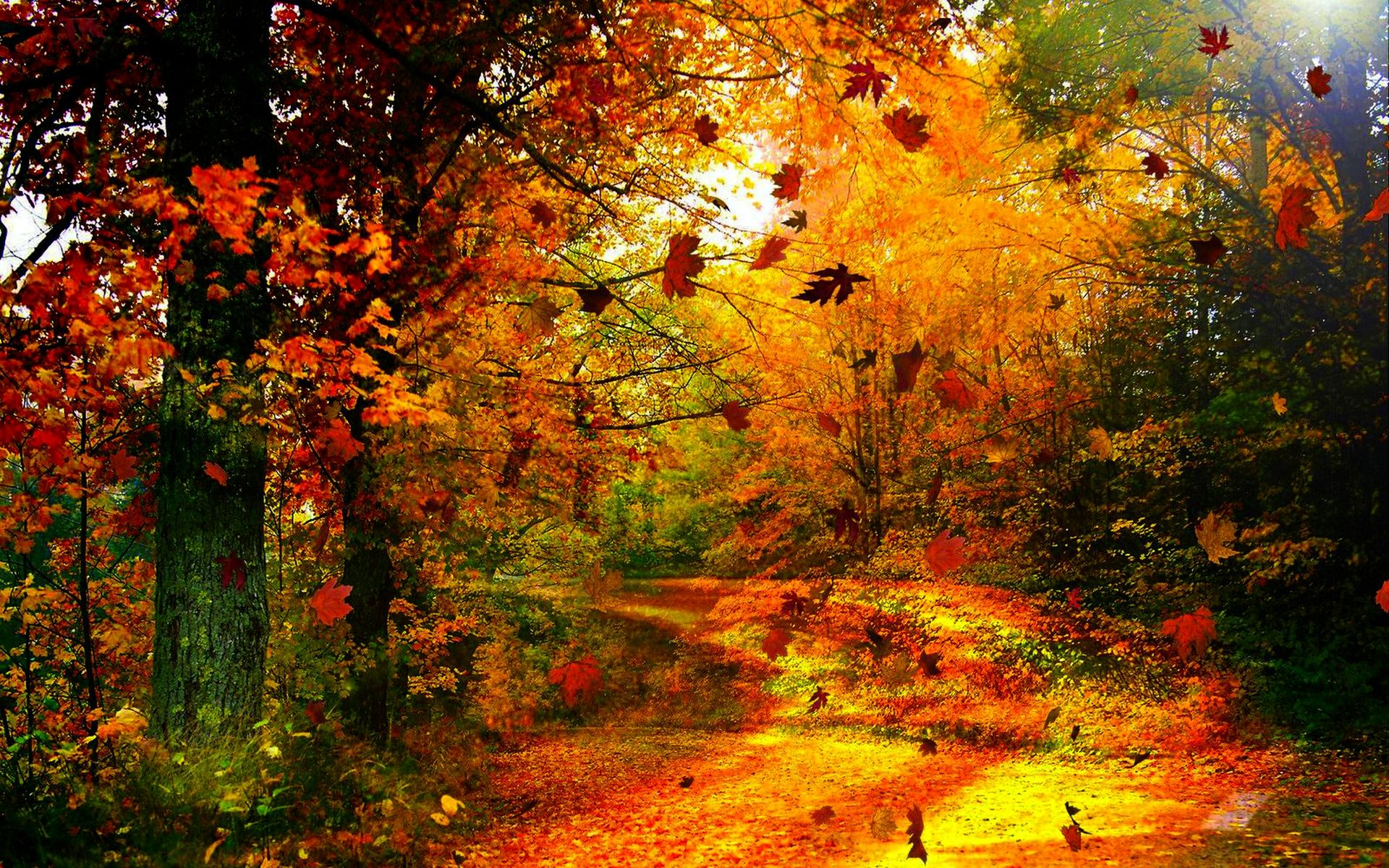 Image detail for Download Autumn Wind wallpaper 234630