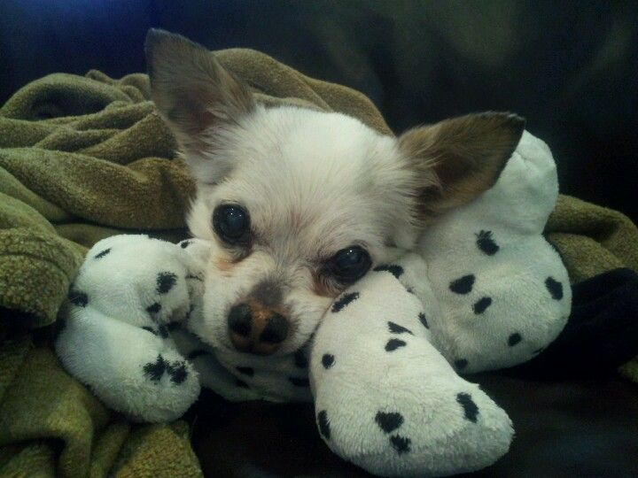 My Dog Chewy Of 15 Years Lost Her Last Year Miss You Baby