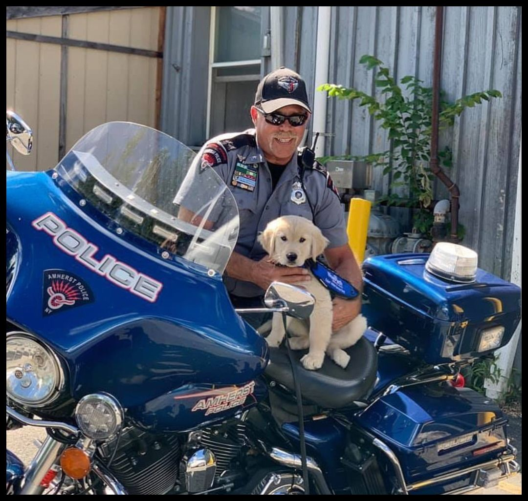 Thanks To Blue Path Service Dogs For Sharing This Great Photo Of A