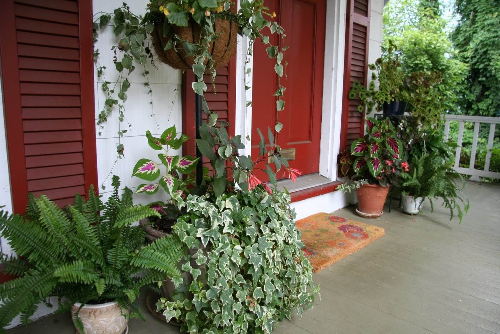 Potted plants front porch