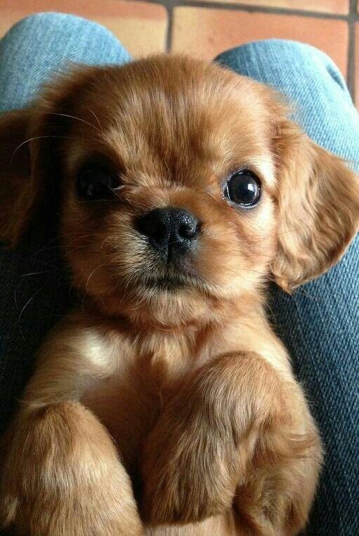 Fantastic Bear Brown Adorable Dog - dee99023e4ad65976d6ca428b018f45f  Trends_577060  .jpg