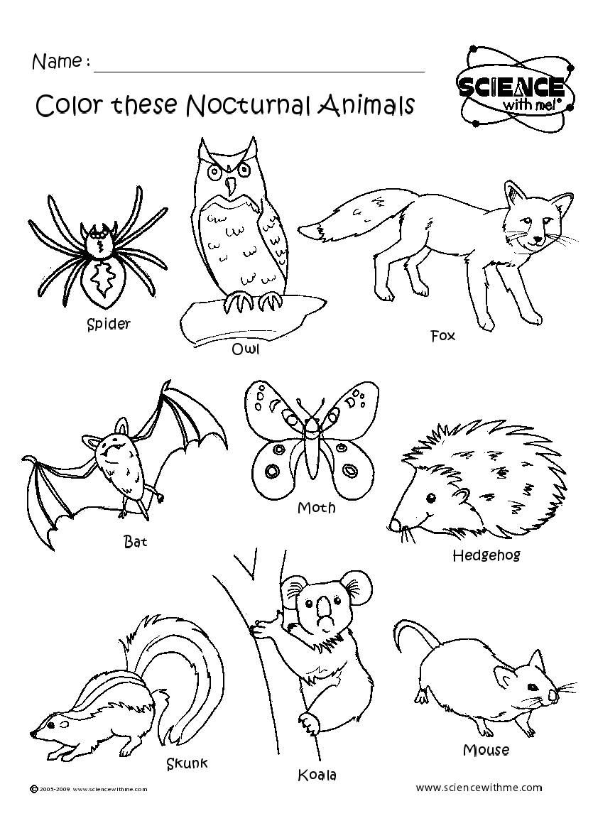 Angol feladatok, mondókák, színezők Nocturnal animals