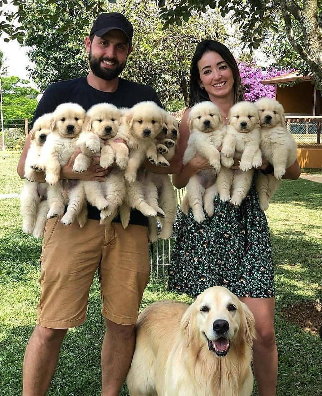 Dog funny 🐶🐶🐶 #dogsdaily #dogslife #dogs_of_instagram #dogsofinstagram #dogsofig #dogsworld #dogsofinstgram #dogscorner #dogsrule #dogslife🐶 #dogs_of_world #dogsonadventures #dogs #dogsofinstaworld #dogselfie #dogshow #dogslover #dogsofinsta #dogsitting #dogstagram