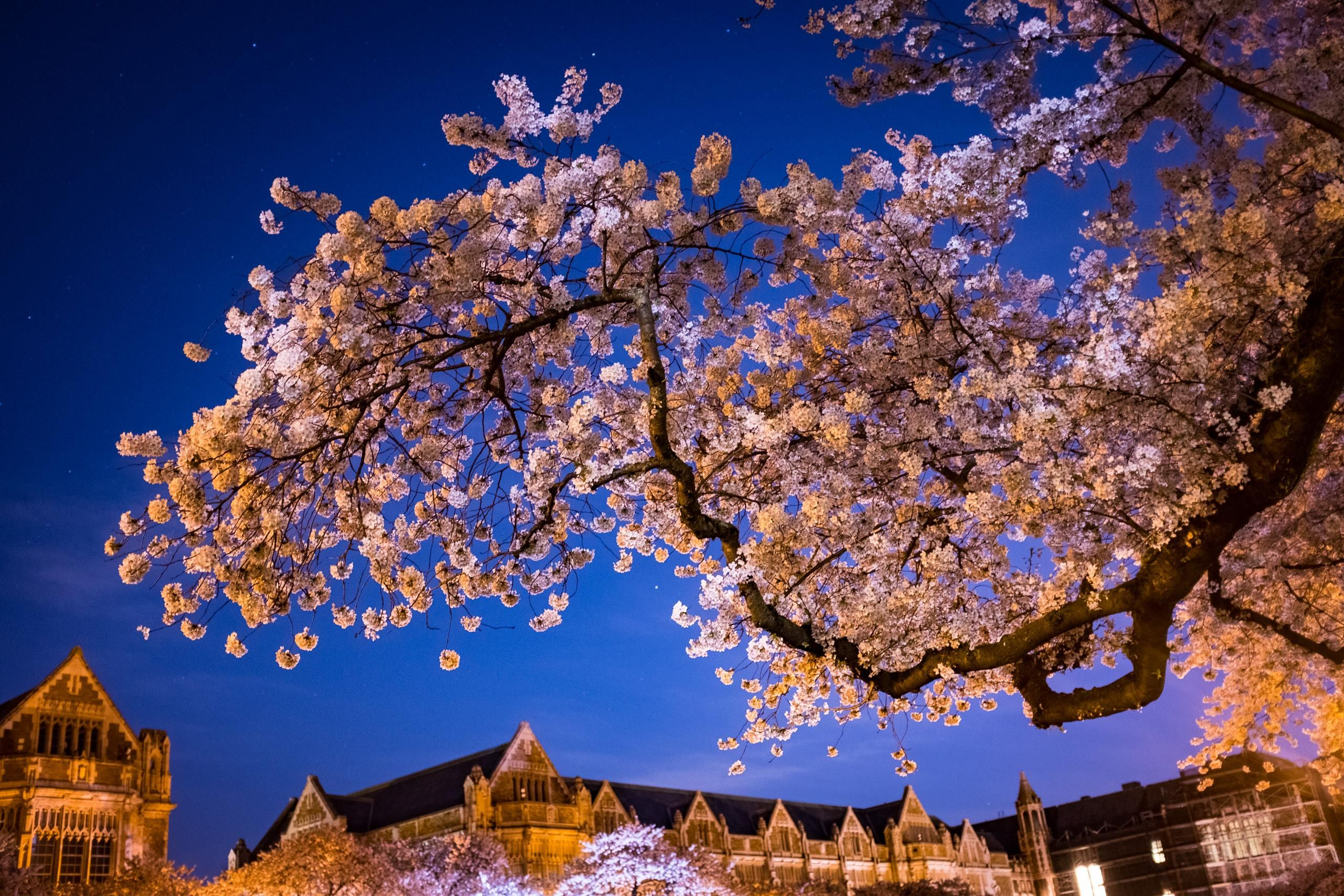 Last Night In Nakameguro Tokyo Aesthetic Japan Japan Tourism Japan Travel