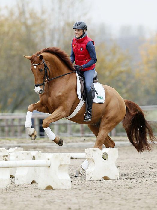 Liostro 12 HannEquestrian D087 Ingrid 48 Horses Klimke eYWHIE29D