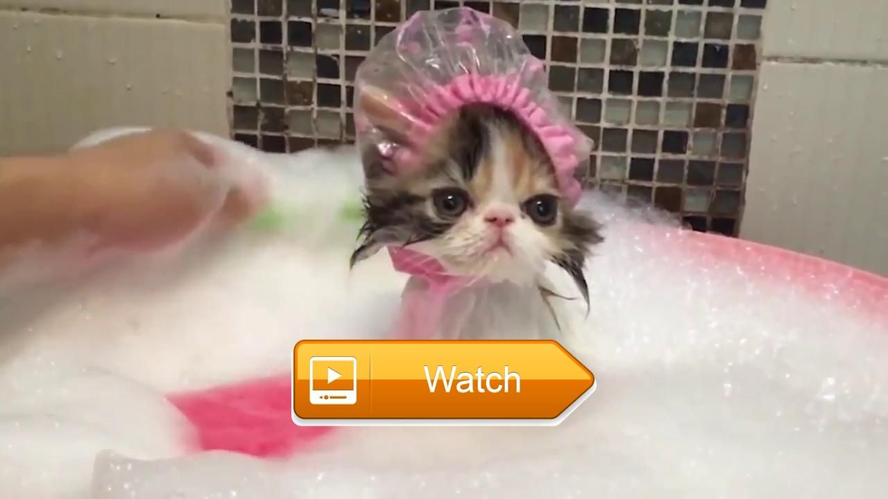 🐙 TOP Funny Animals Funny Videos by Channel Popular 🐵 🐧 on Pet Lovers 🐼 #funnyanimals