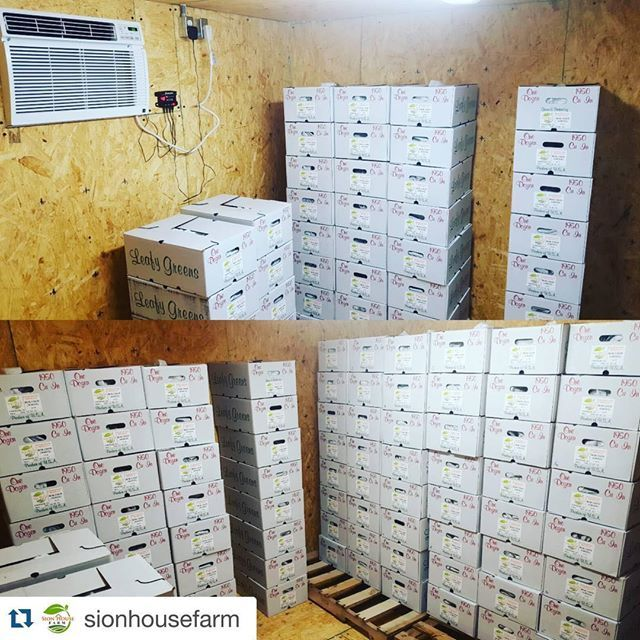 #Repost @sionhousefarm #coolbokchoy #coolbotfarm #coolbotcooler #coolbot . ・・・ 90 cases of Bok Choy picked and packed in our new homemade walk-in cooler that we put into service today!  Out for delivery tomorrow.. #hydroponics #sionhousefarm #coolbot #produce