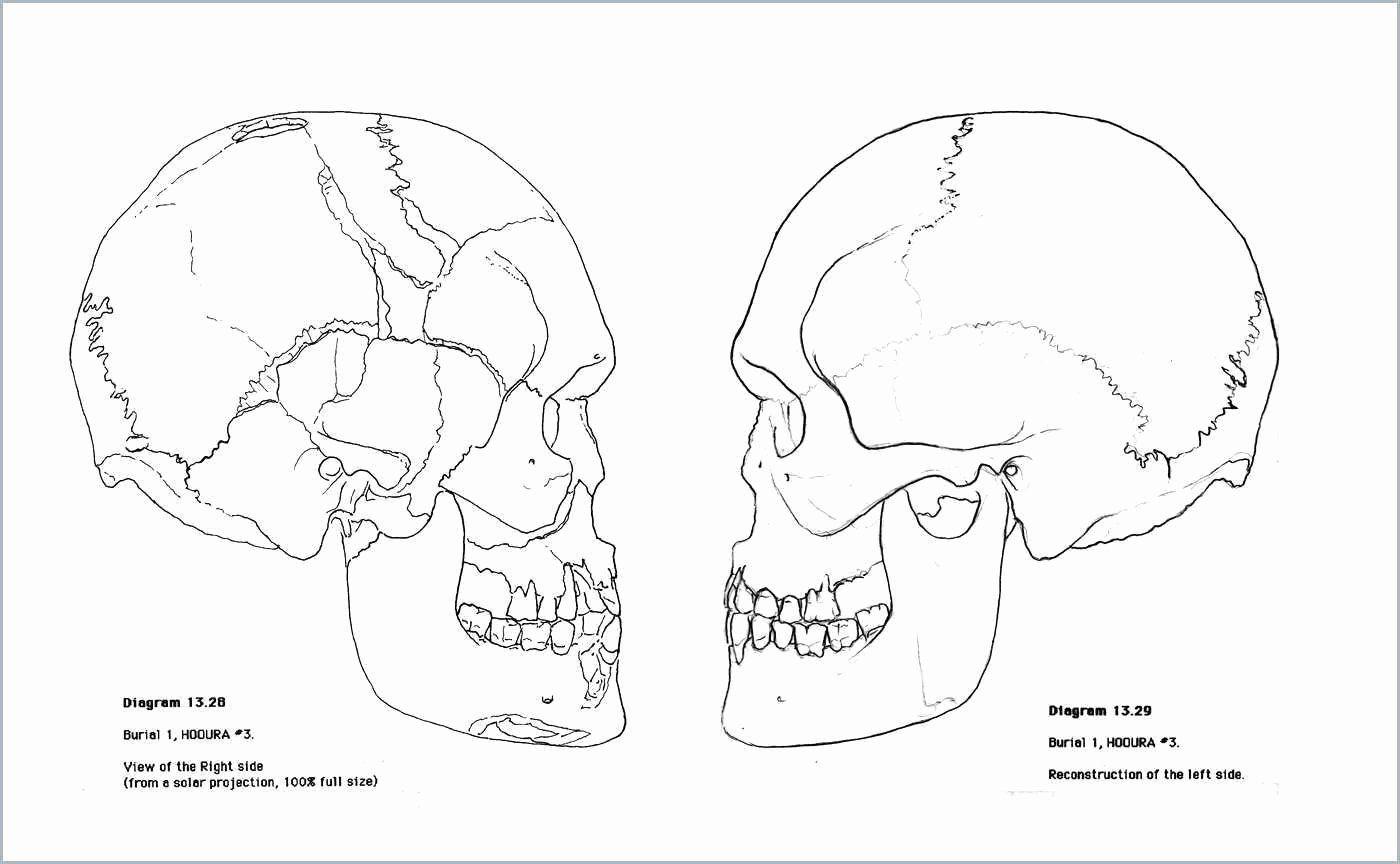 Human Anatomy Drawing Book Pdf in 2020   Skull coloring ...