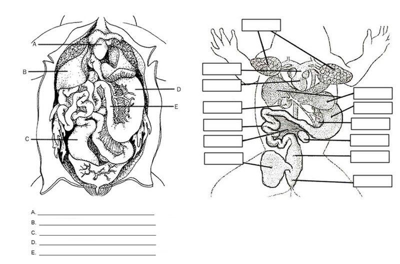 View Internal Anatomy Worksheet Answers Background