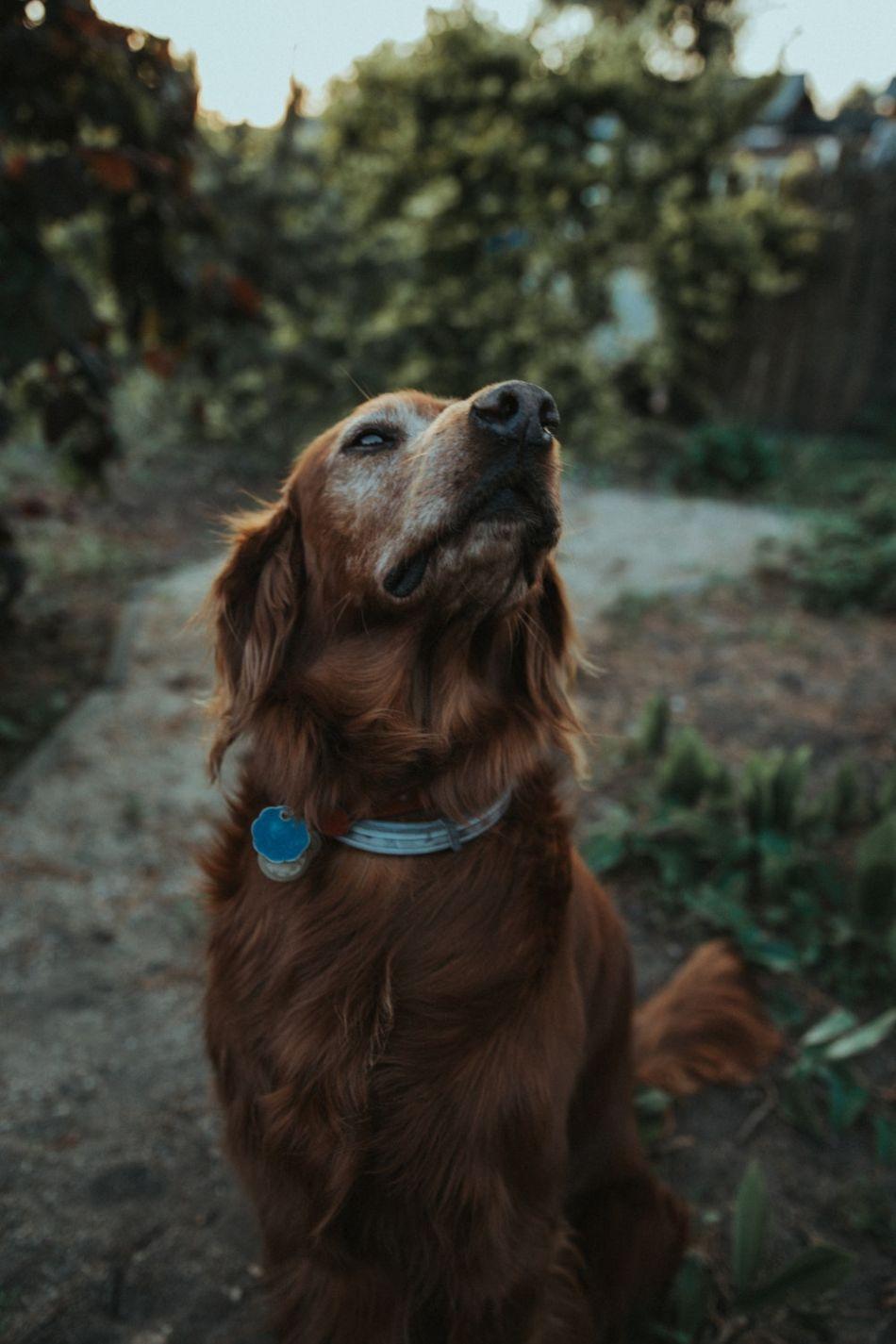 dog massage tips Dogs, Dog advice, Pregnant dog