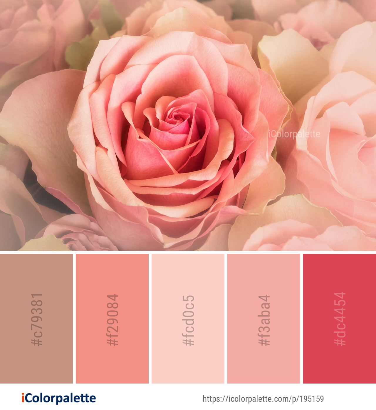 Color Palette Ideas From 9097 Flower Images Icolorpalette Color Palette Pink Paint Color Codes Hex Color Palette