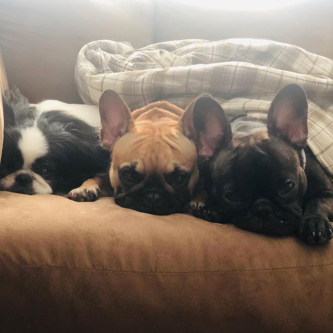 New Year Same Minions Happy New Year Everyone Hope 2020 Is What You Want It To Be Frenchies Frenchie In 2020 Happy New Year Everyone Bulldog Happy New