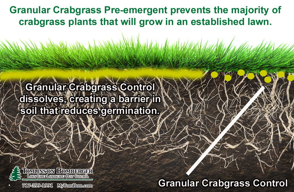 1 Or 2 Applications Of Crabgrass Control Lawn Care Crab Grass Pest Control