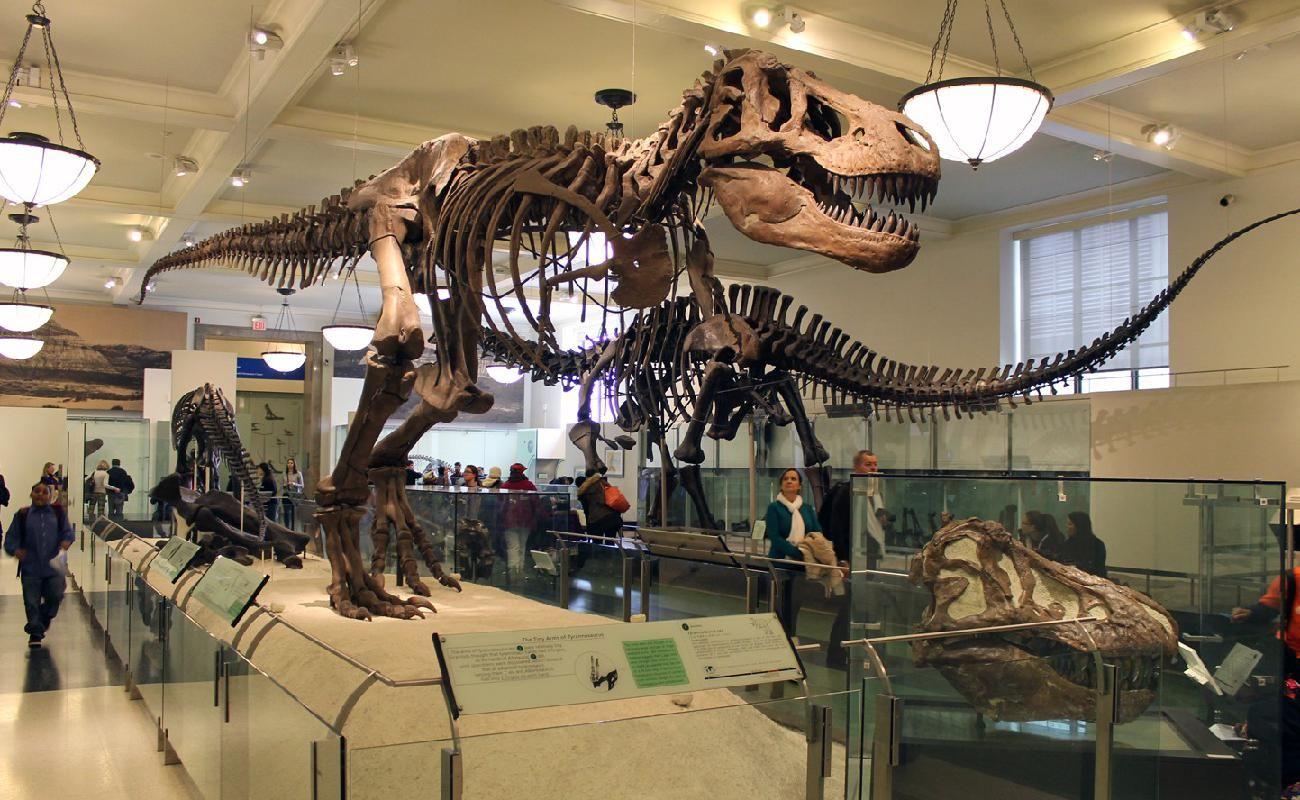 Museo Americano de Historia Natural en Nueva York (con imágenes ...