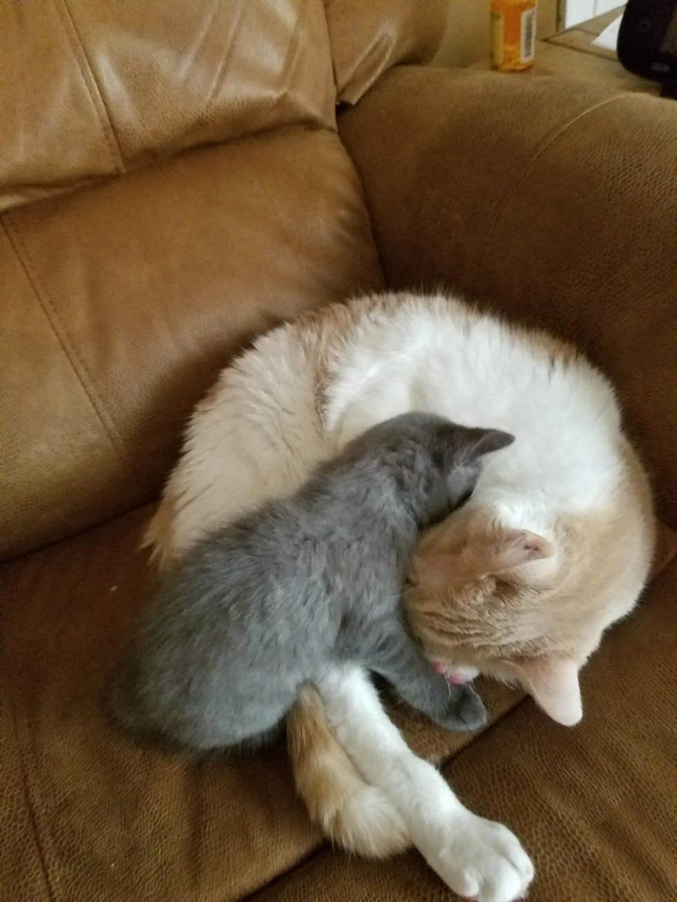 Rescued Stray Kitten Thinks Family Cat Is Her Dad