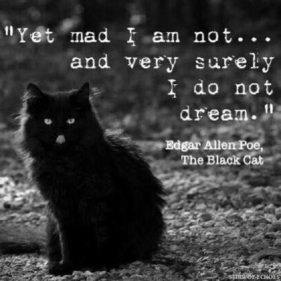 Quote from The Black Cat | Edgar Allan Poe | Poe quotes ...