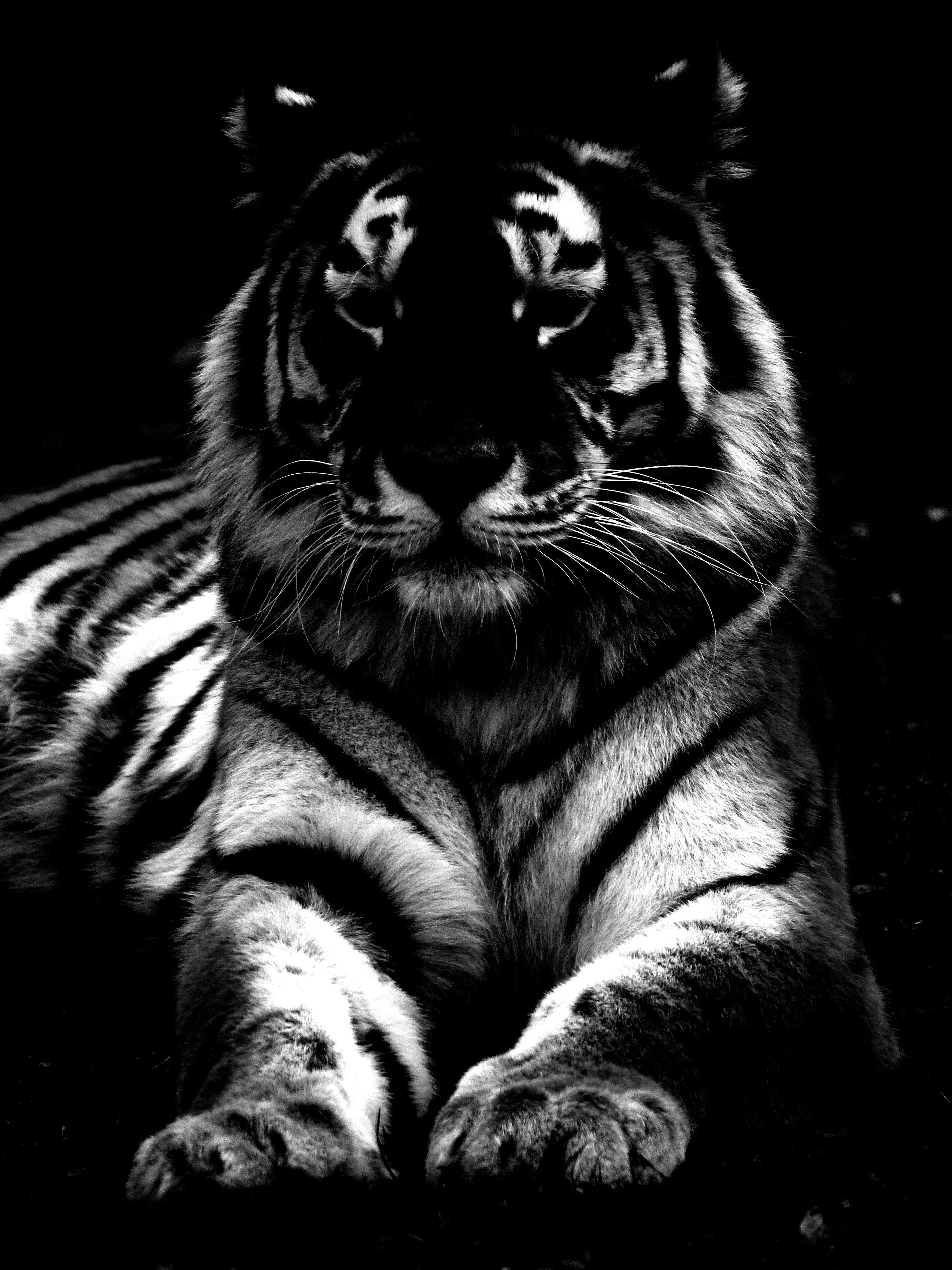 больше появляется темные картинки с тигром оперативно-следственной