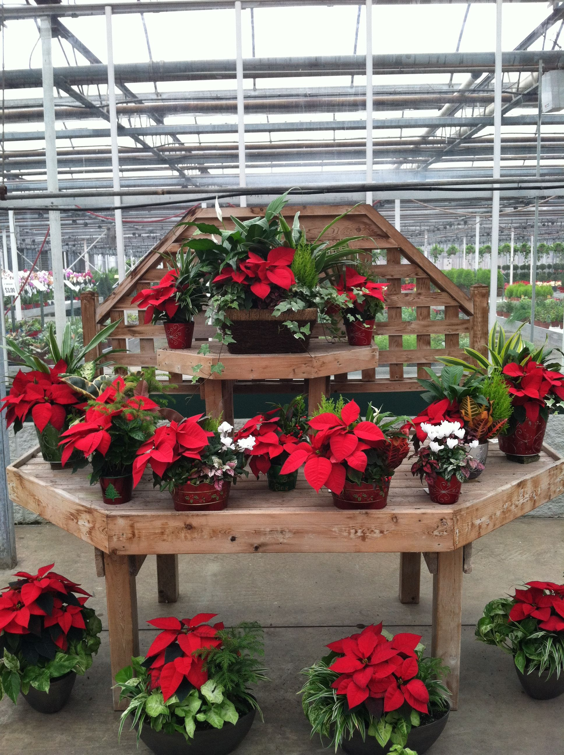 Full picture of Poinsettia combos Garden center displays