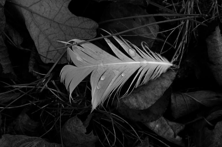 "Saatchi Art Artist Cynthia Conrin; Photography, ""Fallen Feather"" #art"