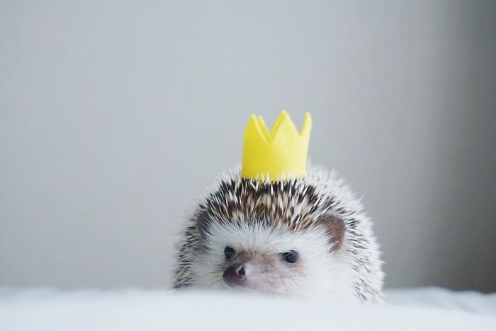 Image result for cute hedgehog