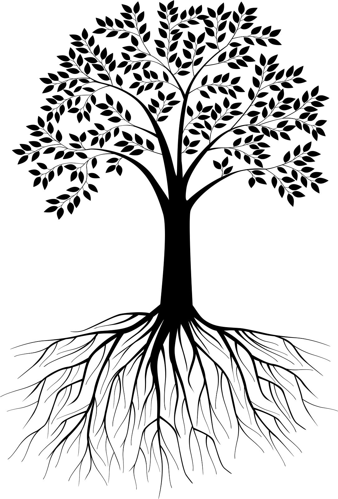 Black And White Tree Silhouette With Roots