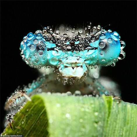 Morning dew on insect