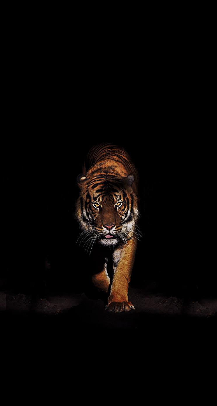 Pin by Charli Jones on Strong Tattoos Tiger wallpaper