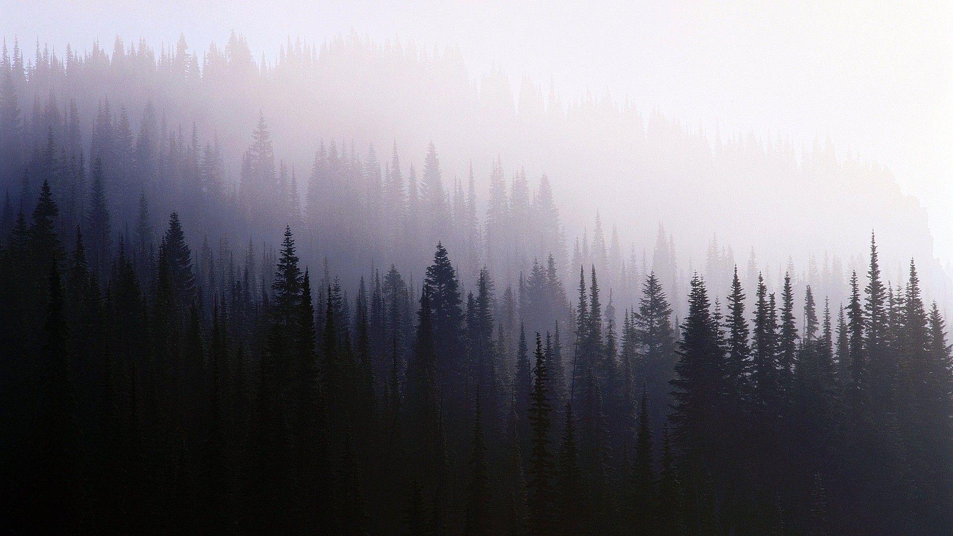 Nature Trees Mist Forest Wallpaper En 2019 Fondos