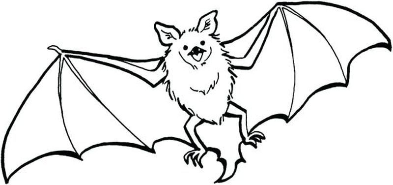 Bat Coloring Pages For Your Kids Halloween Coloring Pages