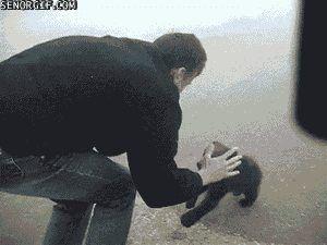 cutest bear attack - Imgur